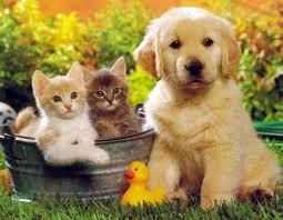 Три братца котята и щенок.  Щелкните правой кнопкой мыши на изображение, чтобы...