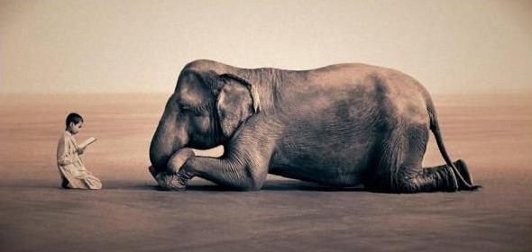 Зачем слон